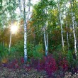 Stock Photo: Meadow in autumn birch forest