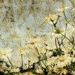 Grunge image of daisies on a background of the sky — Stock Photo