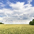 View of agricultural fields — Stock Photo