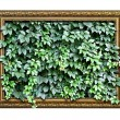 Frame  with green leaves inside — Stock Photo