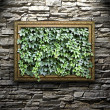 Frame on the stone wall with green leaves inside — Stock Photo