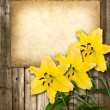 Card for invitation or congratulation with yellow lily flower — Stock Photo