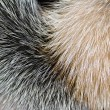 Arctic fox fur closeup as background — Stock Photo