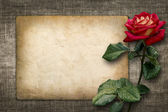 Card for invitation or congratulation with red rose — Stock Photo