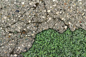 Bead old asphalt with green grass under him — Stock Photo