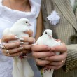 Wedding doves close-up in the hands of the bride and groom — Stock Photo