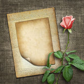 Card for invitation or congratulation with pink rose — Stock Photo