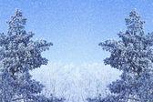 Winter achtergrond met ijzige takken — Stockfoto