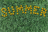 Inscription of yellow flowers on a background of grass — Stock Photo