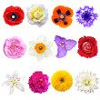 Stock Photo: Set of Colorful Flowers Isolated on White Background