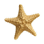 Starfish  isolated on white background — Stock Photo
