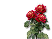 Bouquet of red roses on a white background — Stock Photo
