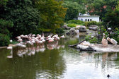 Flamingos and pelicans in the zoo — Stock Photo