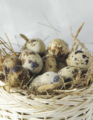 Quail eggs in a basket — Stock Photo