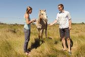 Pareja joven alimentar un caballo — Foto de Stock