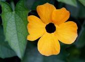 Güzel sarı çiçek — Stok fotoğraf