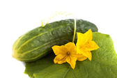 Fresh cucumber with yellow flowers lying on a green leaf, isolated on a white background — Stock Photo