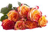 Ramo de rosas sobre un fondo blanco — Foto de Stock