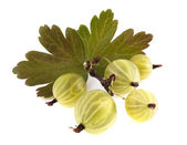 Ripe gooseberry with green leaves isolated on white background — Stock Photo