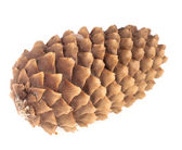 Pinecone on white background — Stock Photo