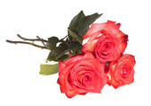 Bouquet of roses on a white background — Stock Photo