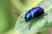 Yeşil yaprak böceği — Stok fotoğraf