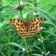 Butterfly on green plants in the wild — Stock Photo