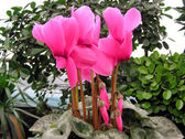 Beautiful flowers in a flower market — Stock Photo