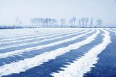 Pond scenery in winter — Stock Photo