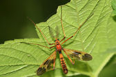 Insects on green leaf — Stock Photo