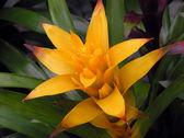 Showy bromeliads plant — Stock Photo