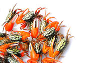 Fiddler crabs — Stock Photo
