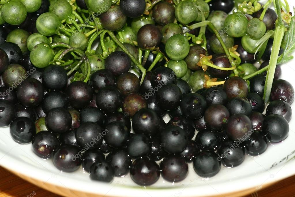 Solanum Nigrum Fruit a Plate of Solanum Nigrum