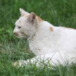 Cat in grass — Stock Photo #19651017