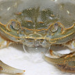 Spitting bubble of crab — Stock Photo
