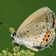 Butterfly — Stock Photo #21159879