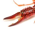 Crayfish claws — Stock Photo #21169871