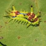 Lepidoptera — Stock Photo