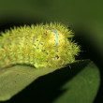 Lepidoptera — Stock Photo #21161419