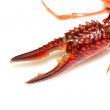 Crayfish claws — Stock Photo #21169871
