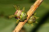 野生の緑の葉の上鱗翅目 — ストック写真