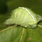 Lepidoptera — Stock Photo #21173677