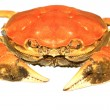 Crab on a white background — Stock Photo