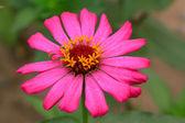 Beautiful flowers — Foto de Stock