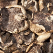 Stock Photo: Dried mushrooms