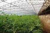 Cieplarnianych warzyw — Zdjęcie stockowe