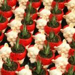 Flowerpots — Stock Photo #21999429