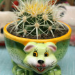 Flowerpots — Stock Photo #21999449