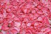 Swathes of the peach blossom petals — Stock Photo