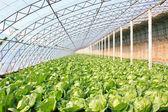 Vegetable greenhouse — Stock Photo